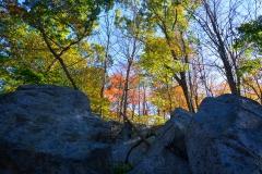 Granite & Trees