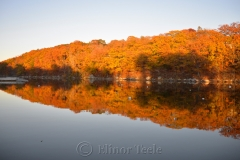 Fall Foliage on the Cove 2