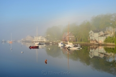Fog on the Harbor