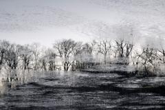 Trees & Ice at Dawn
