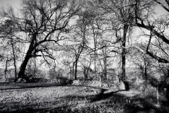 Leafless Trees 2
