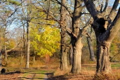 November Afternoon 3