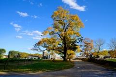 Blue Skies in October