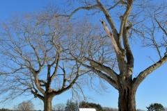 Trees & Jimmy's Barn in Winter