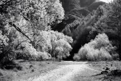 squam-creative-teele-arrow-riverbed-trees-1