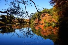 Macone's Pond