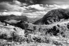 squam-creative-teele-sawpit-gully-view-lion-black-white