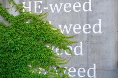 I Weed