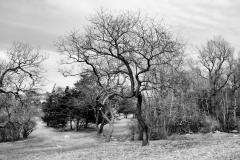 Pasture in April 2