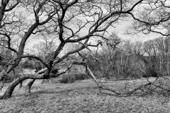 Pasture in April 3