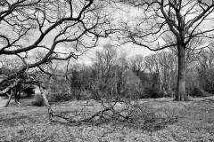 Pasture in April 4