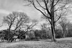 Pasture in April 5