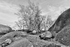 Pasture in April 6