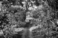 Pasture in Black & White 1