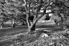 Pasture in Black & White 2