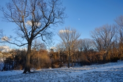 Pasture & Moon in January Snows
