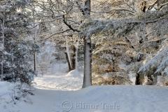 Snowy Pasture Trees