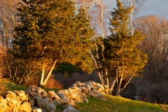 Stone Walls & December Light