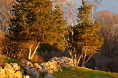 Stone Walls & December Light