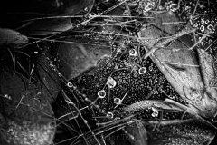Raindrops on Spider Webs 8