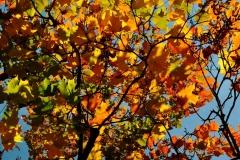 Mixed Color Foliage