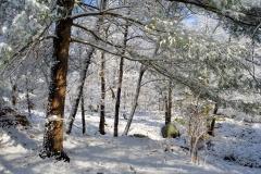 December Frosting 4