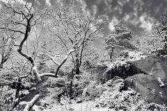 December Frosting B&W 1