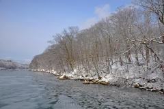Cove & Woods in February