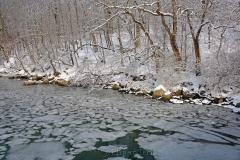 Woods in February