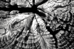 Wood Patterns 1