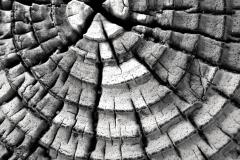 Wood Patterns 2