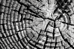 Wood Patterns 7