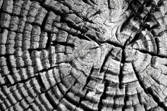 Wood Patterns 7