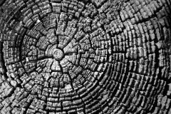 Wood Patterns 8