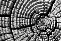 Wood Patterns 9