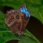 Butterflies, Otago Museum, Dunedin, New Zealand 1