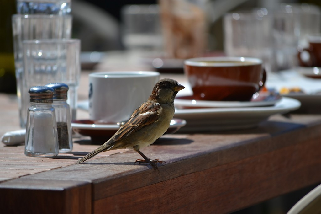 Cafe Sparrow, Wellington, New Zealand