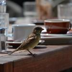 Cafe Sparrow, Wellington, New Zealand