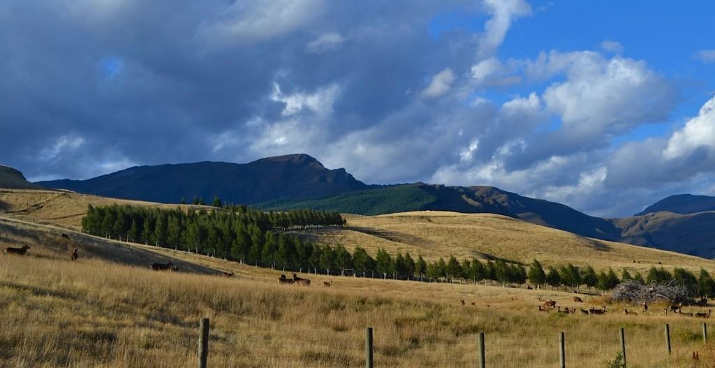 Deer Farm, Central Otago, New Zealand