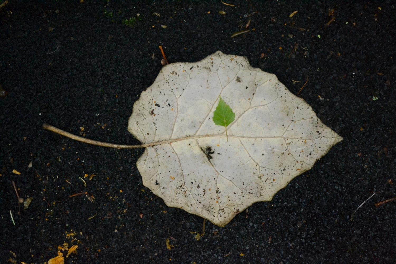 Leaf Within a Leaf
