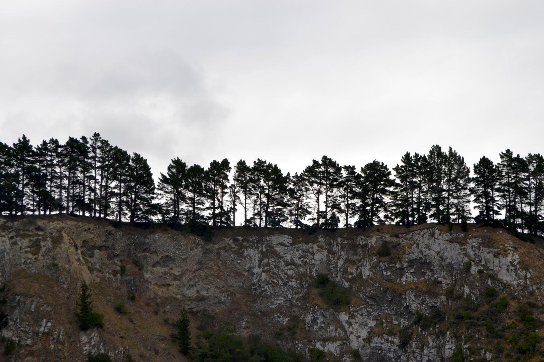 Trees, Long Beach, Dunedin, New Zealand