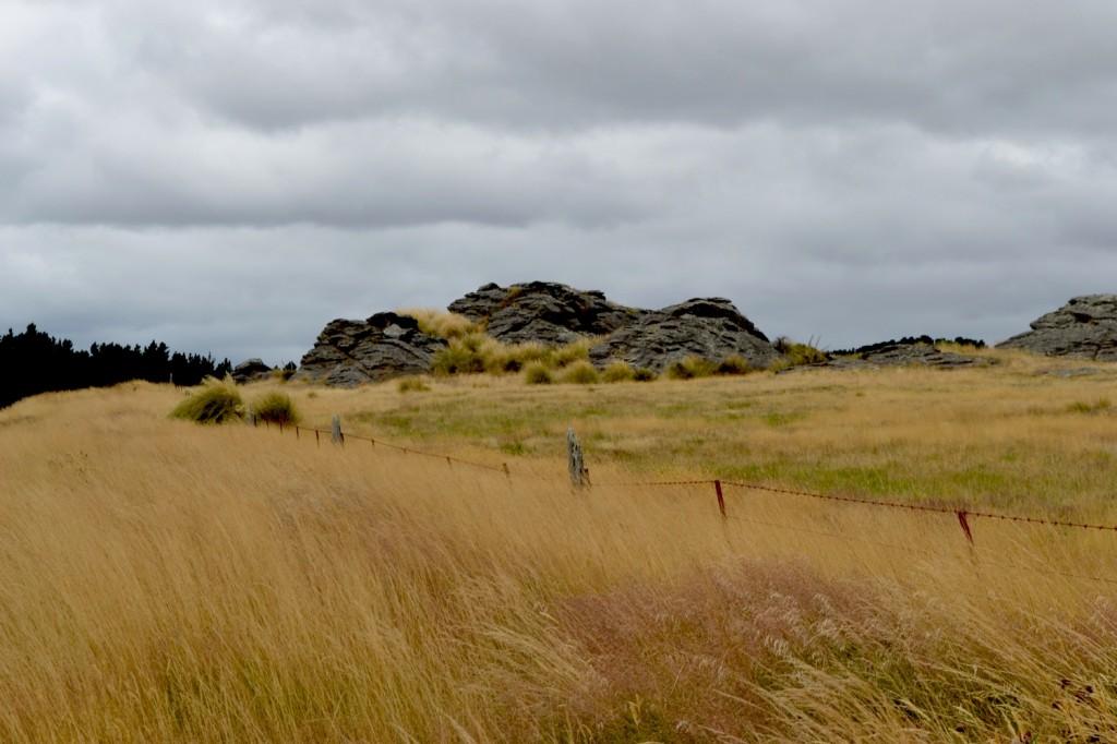 Manioto, New Zealand