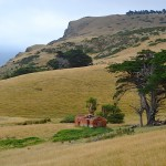 Paradise Track, Otago Peninsula, Dunedin, New Zealand