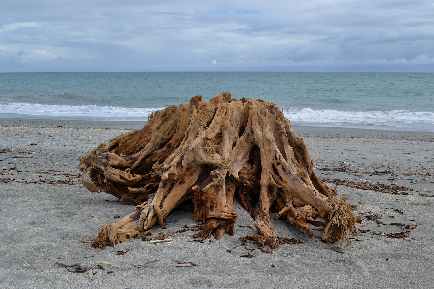 Tree Trunk on Beach, West Coast, New Zealand