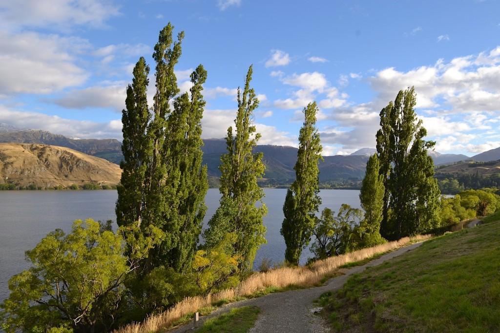 Lake Hayes Trees, Central Otago, New Zealand