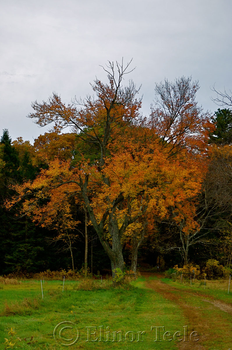Fall Foliage, Appleton Farms, Ipswich MA