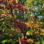 Fall Foliage, Cape Ann MA 2