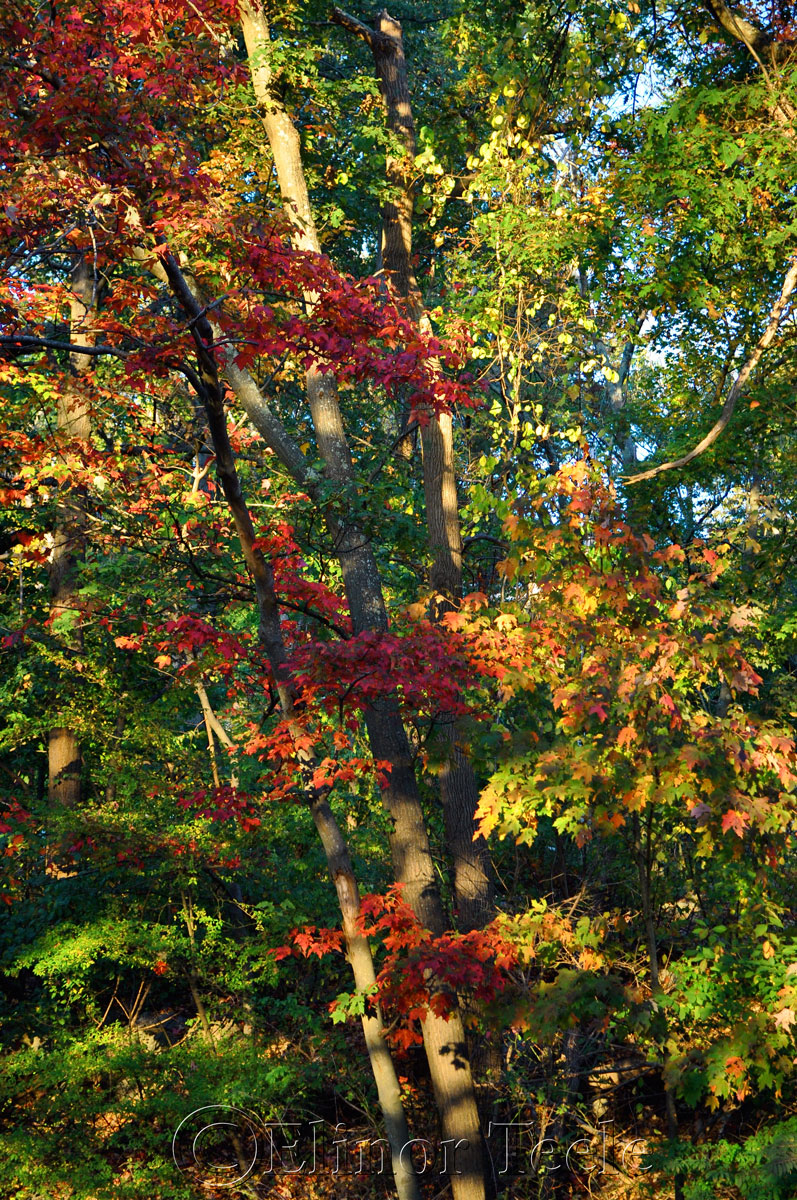 Fall Foliage, Cape Ann 2