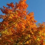 Fall Foliage, Cape Ann MA