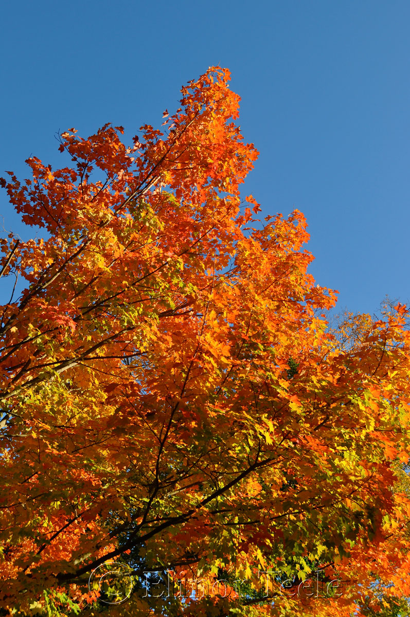 Fall Foliage, Cape Ann MA